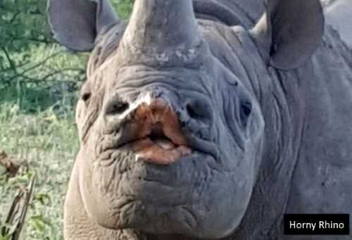 Horny Rhino - can not get a mortgage. Probably